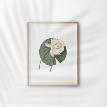 diy-inspiration-water-lily.jpg